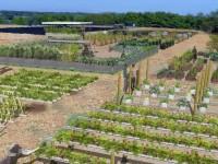Versailles veut installer des fermes en ville