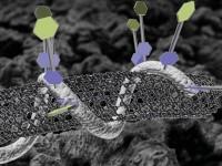 Nanomatériaux : incertitudes sur la toxicité