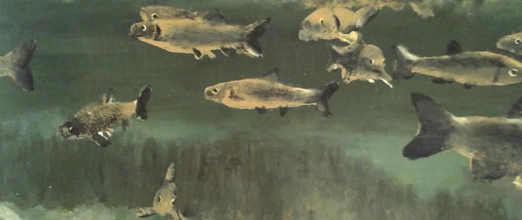 Biodiversité: avec et sans poissons